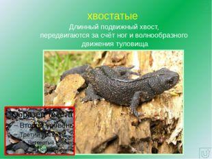 Многообразие отряда Хвостатые земноводные Восточная тигровая саламандра Мрамо