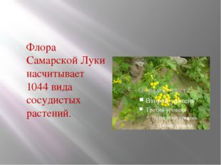 Флора Самарской Луки насчитывает 1044 вида сосудистых растений.