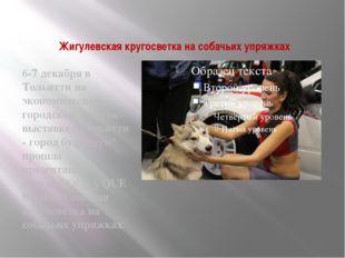 Жигулевская кругосветка на собачьих упряжках 6-7 декабря в Тольятти на эконом