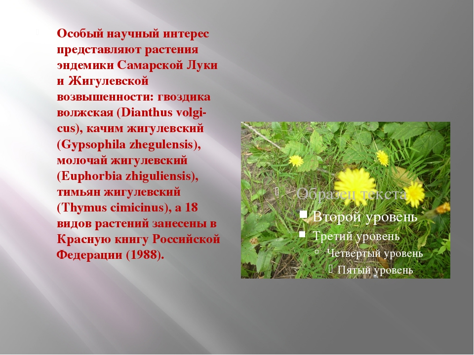 Особый научный интерес представляют растения эндемики Самарской Луки и Жигул...