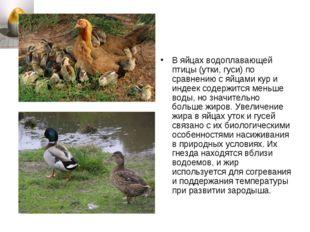 В яйцах водоплавающей птицы (утки, гуси) по сравнению с яйцами кур и индеек с