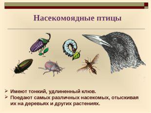 Имеют тонкий, удлиненный клюв. Поедают самых различных насекомых, отыскивая и
