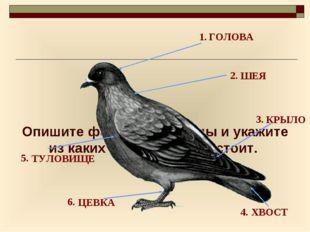 Опишите форму тела птицы и укажите из каких отделов оно состоит. 1. 2. 3. 4.