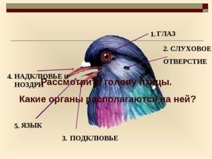 Рассмотрите голову птицы. Какие органы располагаются на ней? 1. 2. 3. 5. 4. Г