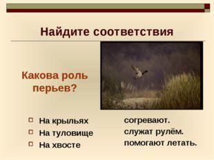 Найдите соответствия На крыльях На туловище На хвосте согревают. служат рулём
