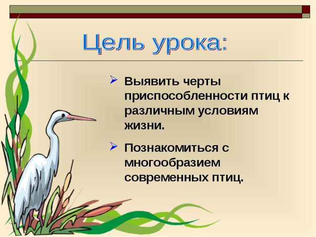 Выявить черты приспособленности птиц к различным условиям жизни. Познакомитьс...