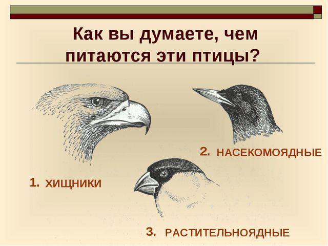 Как вы думаете, чем питаются эти птицы? 1. 3. 2. ХИЩНИКИ НАСЕКОМОЯДНЫЕ РАСТИТ...