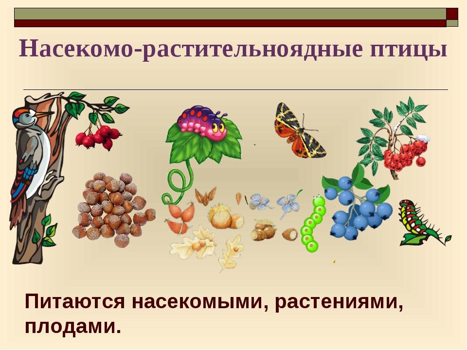 Питаются насекомыми, растениями, плодами. Насекомо-растительноядные птицы