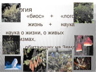 Биология «биос» + «логос» жизнь + наука наука о жизни, о живых организмах, об