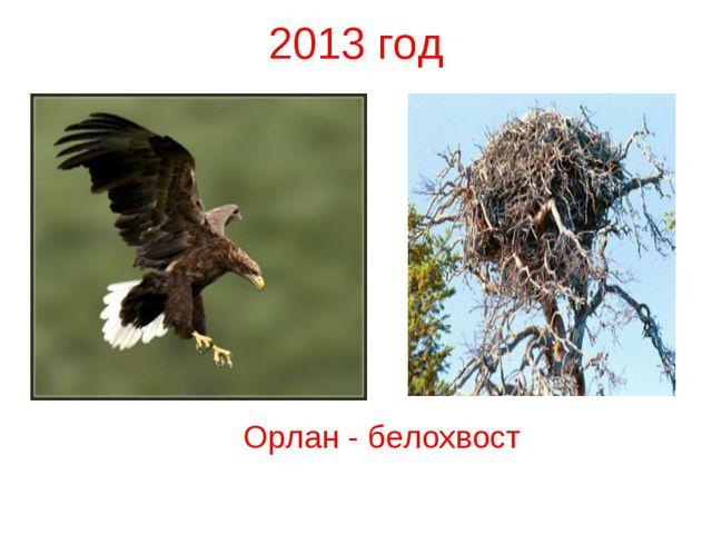 2013 год Орлан - белохвост