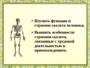 Изучить функции и строение скелета человека; Выявить особенности строения ске