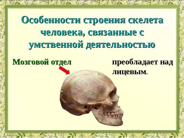 Мозговой отдел преобладает над лицевым. Особенности строения скелета человека...