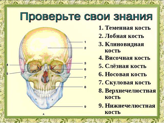 1. Теменная кость 2. Лобная кость 3. Клиновидная кость 4. Височная кость 5. С...