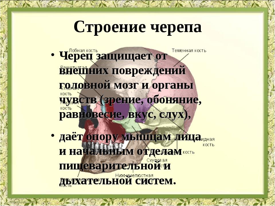 Строение черепа Череп защищает от внешних повреждений головной мозг и органы...