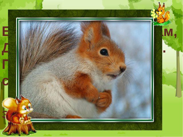 Белка прыгает по веткам, Достаёт орешки деткам. Прыг да скок, прыг да скок- П...