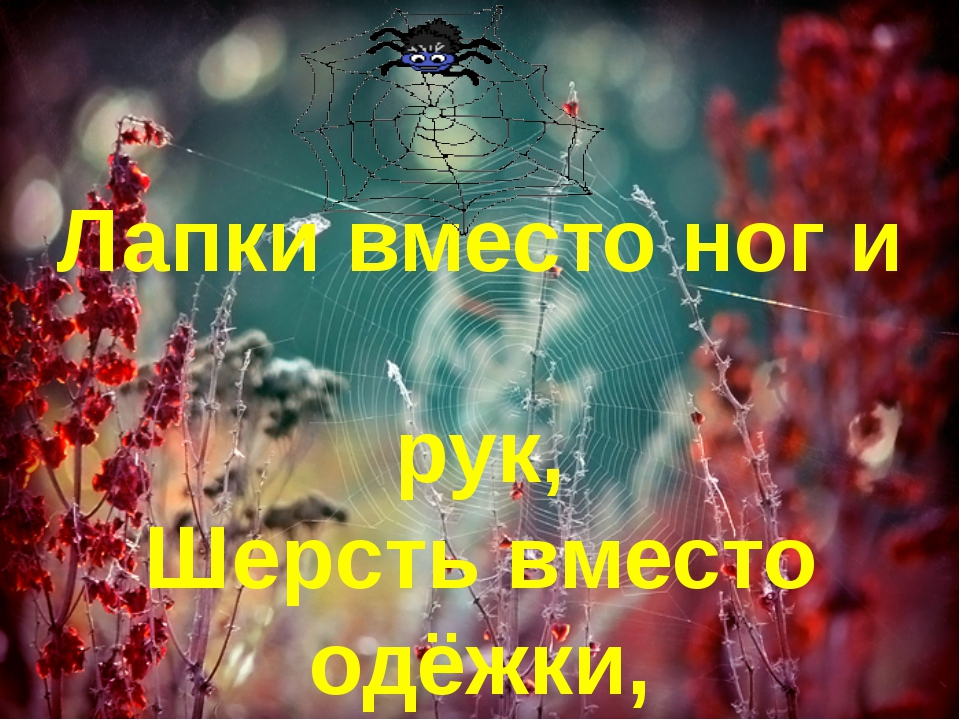 Лапки вместо ног и рук, Шерсть вместо одёжки, Паутину ткёт паук, Берегитесь,...
