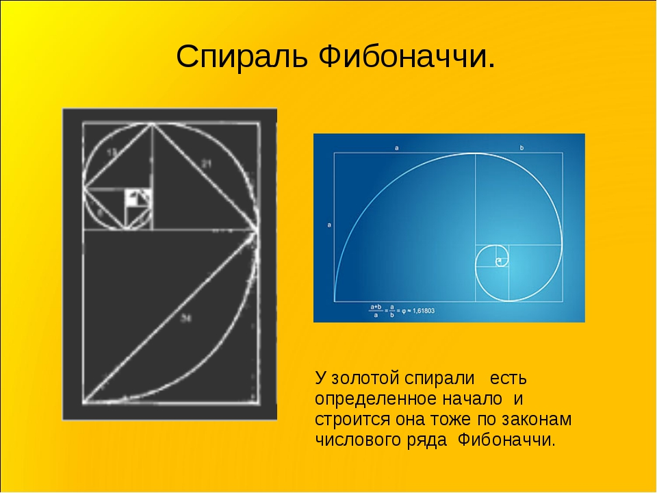 Спираль Фибоначчи. У золотой спирали есть определенное начало и строится она...