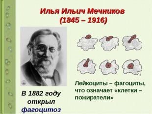 Илья Ильич Мечников (1845 – 1916) В 1882 году открыл фагоцитоз Лейкоциты – фа