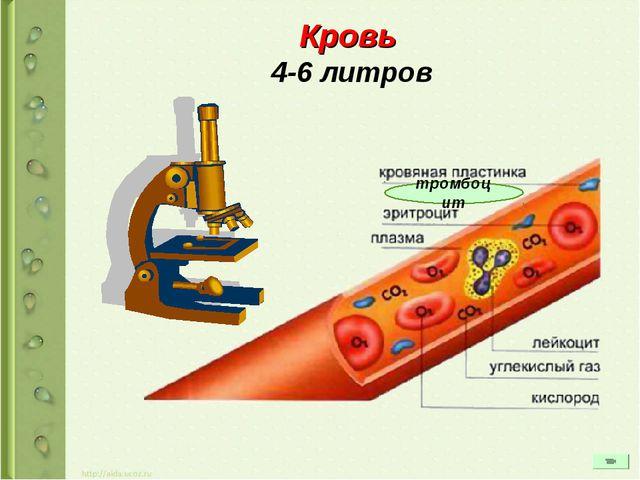 Кровь 4-6 литров