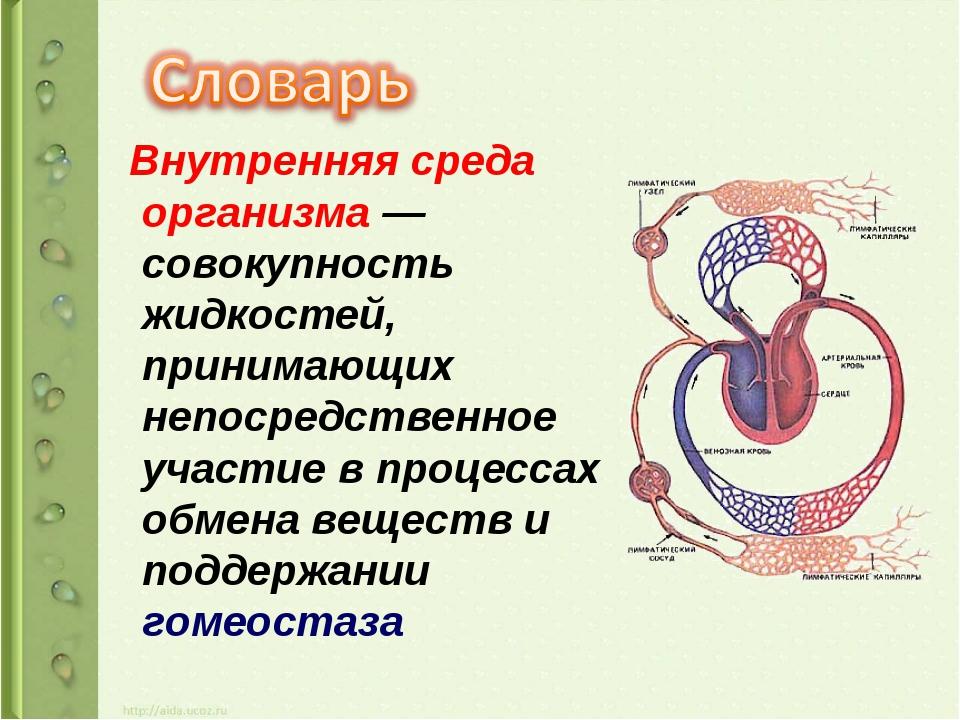 Внутренняя среда организма — совокупность жидкостей, принимающих непосредств...