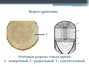 Возраст древесины Основные разрезы ствола дерева: 1 - поперечный, 2 - радиаль