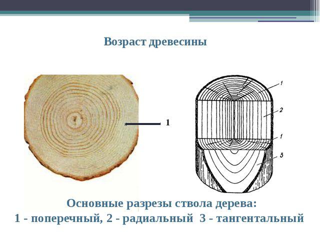 Возраст древесины Основные разрезы ствола дерева: 1 - поперечный, 2 - радиаль...