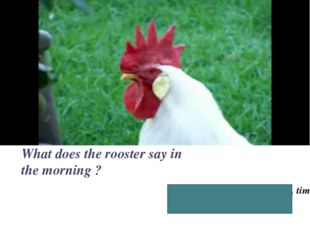 Good, morning! It is time, time to get up! What does the rooster say in the