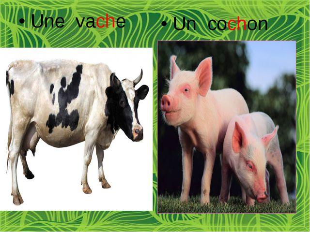 Une vache Un cochon