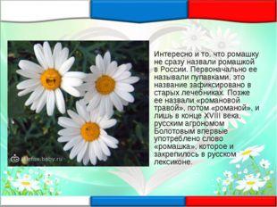 Интересно и то, что ромашку не сразу назвали ромашкой в России. Первоначально