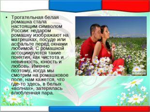 Трогательная белая ромашка стала настоящим символом России: недаром ромашку и