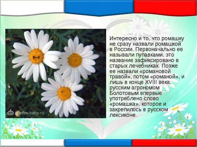 Интересно и то, что ромашку не сразу назвали ромашкой в России. Первоначально...