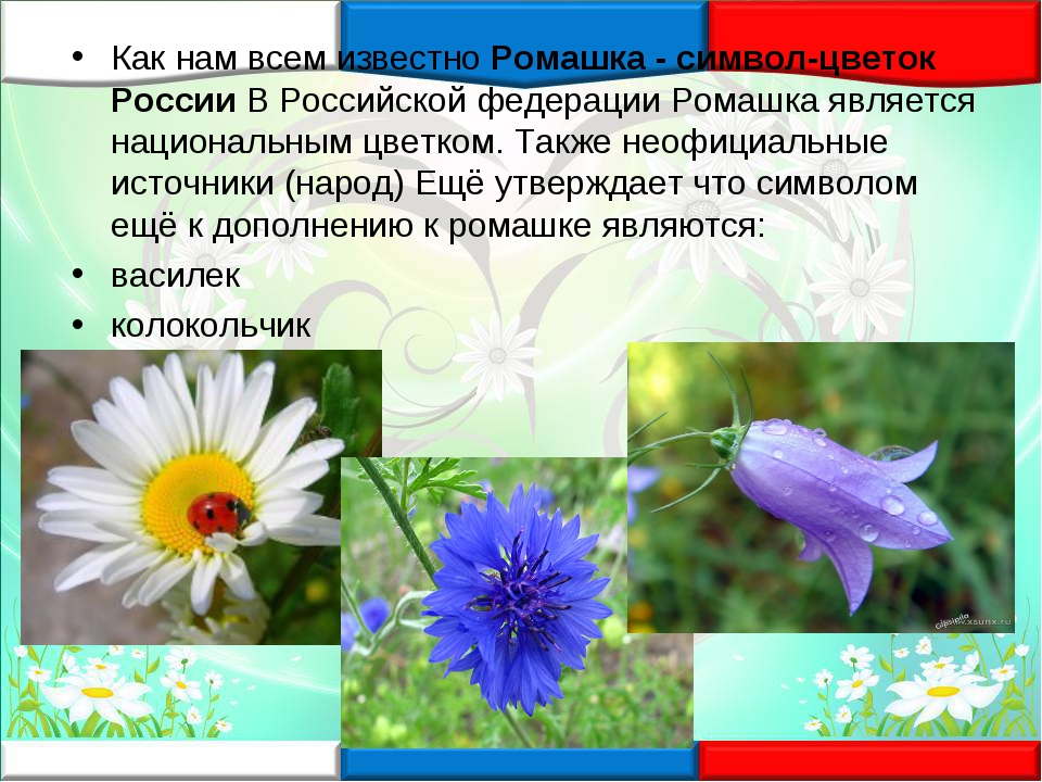 Как нам всем известноРомашка - символ-цветок РоссииВ Российской федерации Р...