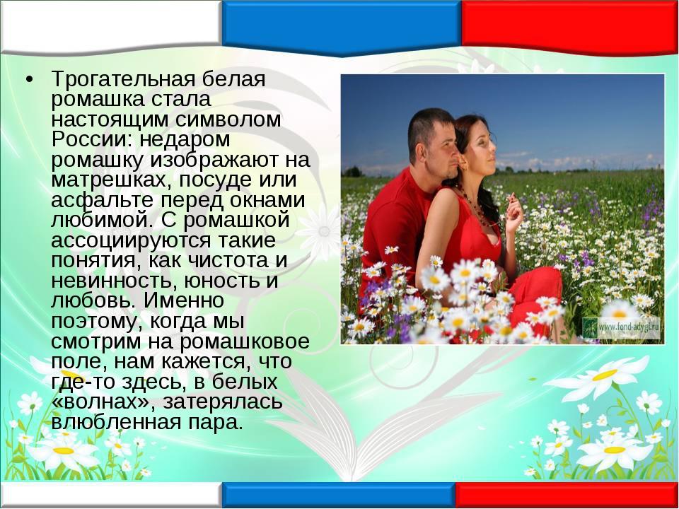 Трогательная белая ромашка стала настоящим символом России: недаром ромашку и...