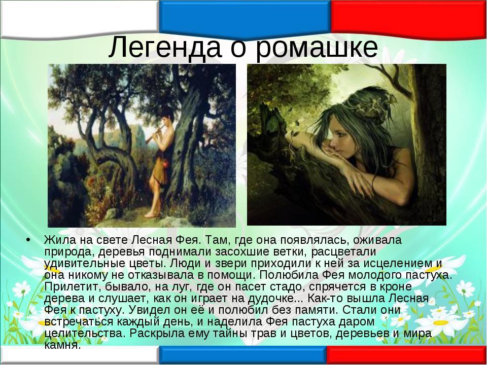 Легенда о ромашке Жила на свете Лесная Фея. Там, где она появлялась, оживала...