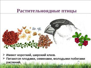 Имеют короткий, широкий клюв. Питаются плодами, семенами, молодыми побегами р