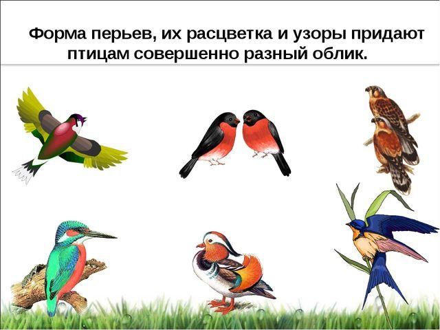 Форма перьев, их расцветка и узоры придают птицам совершенно разный облик.