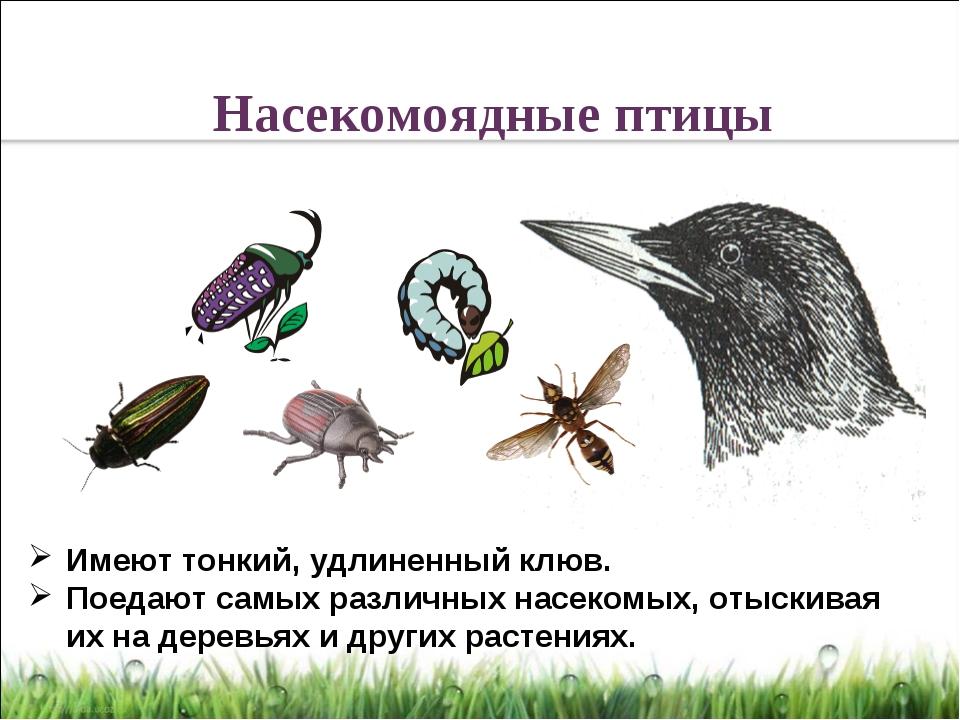 Имеют тонкий, удлиненный клюв. Поедают самых различных насекомых, отыскивая и...
