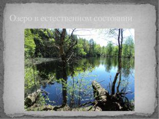 Озеро в естественном состоянии