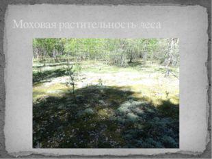 Моховая растительность леса