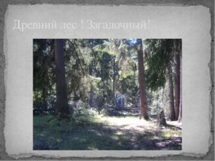 Древний лес ! Загадочный!