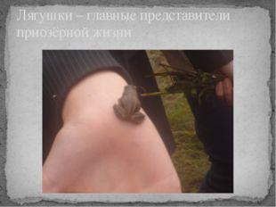 Лягушки – главные представители приозёрной жизни