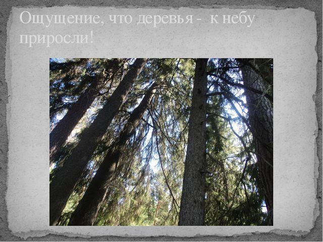 Ощущение, что деревья - к небу приросли!