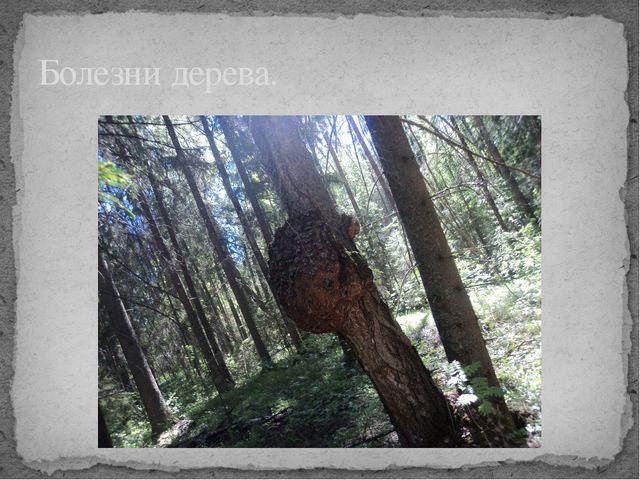 Болезни дерева.