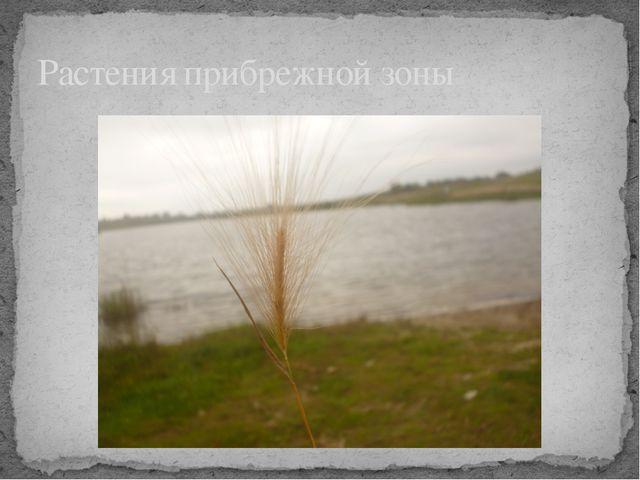 Растения прибрежной зоны
