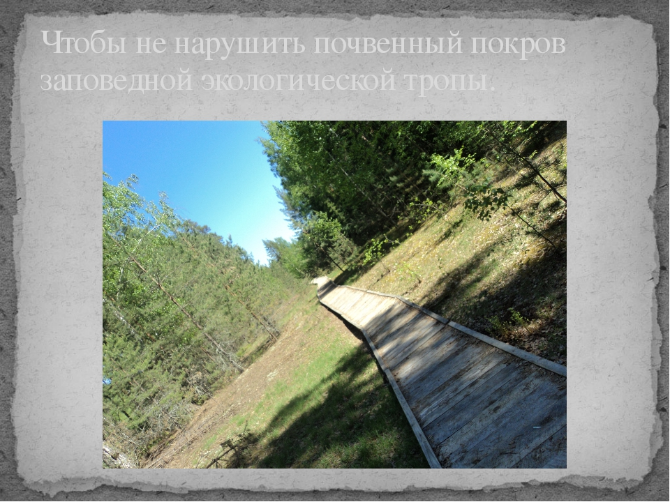 Чтобы не нарушить почвенный покров заповедной экологической тропы.