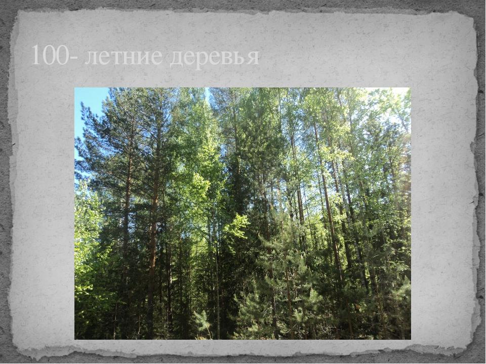 100- летние деревья