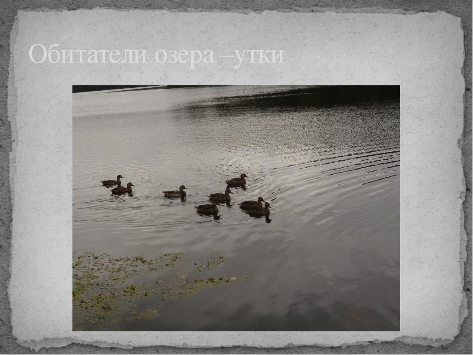 Обитатели озера –утки