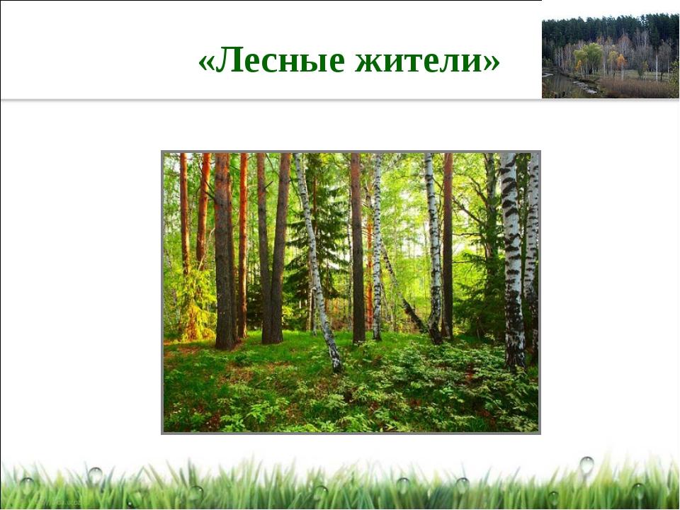 «Лесные жители»