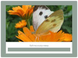 Бабочка-капустница
