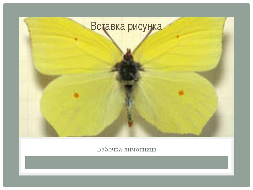 Бабочка-лимонница